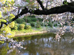 Okazaki Castle's lake